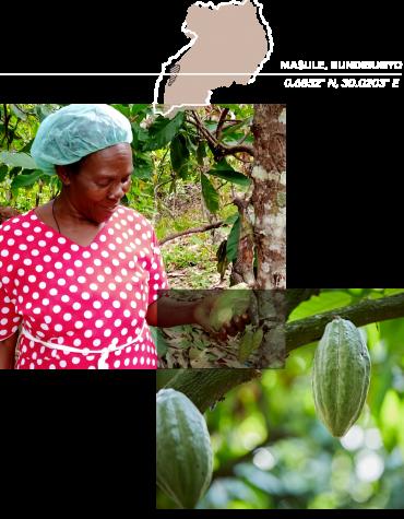 290720_Olam_Twenty_Website_BeanProfile_Overlaping_Images_and_Map_Rwenzori_Fruit